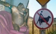 Sexo com animais: bordéis de orangotangos, cavalos e até lamas